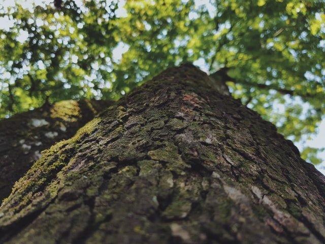 Dia Mundial do Meio Ambiente: A biodiversidade é fundamental!